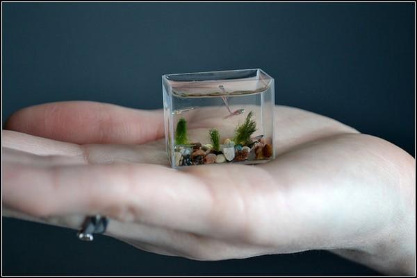 Самый маленький в мире аквариум