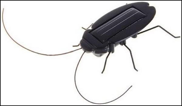Солнечный таракан