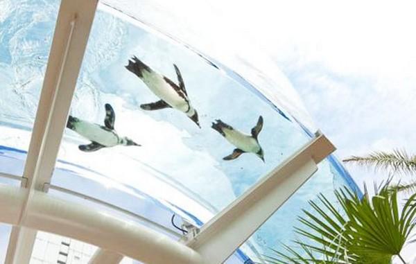 Летающие пингвины в токийском Sunshine Aquarium