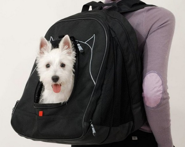 Рюкзак-будка для домашних животных