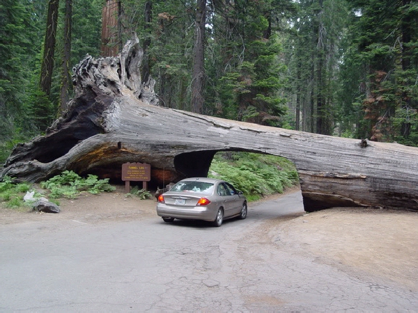 Тоннель внутри дерева