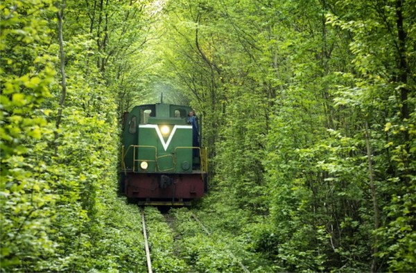 Зеленый тоннель любви в Украине