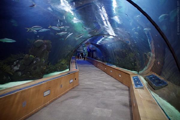 Рыбный тоннель в Испании
