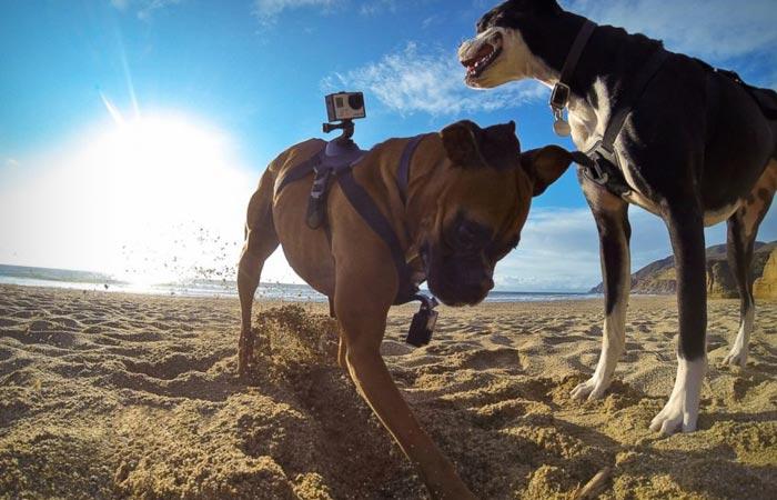 Ремень Fetch для крепления видеокамеры.