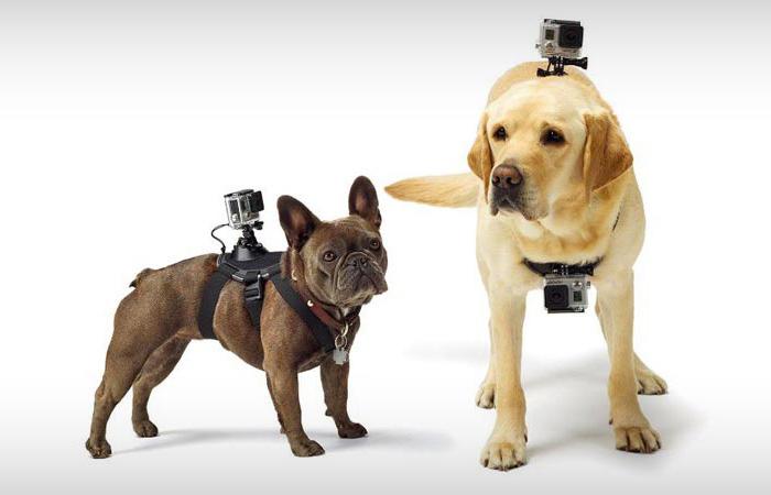 Ремень крепления видеокамеры на питомце.