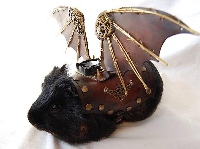 Морская свинка, которая готовится к полету.