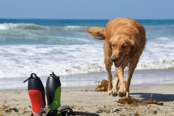 Бутылочка с крышкой, из которой собаке удобно лакать воду.