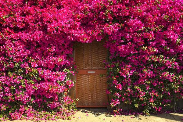 Неизвестная дверь в сад.