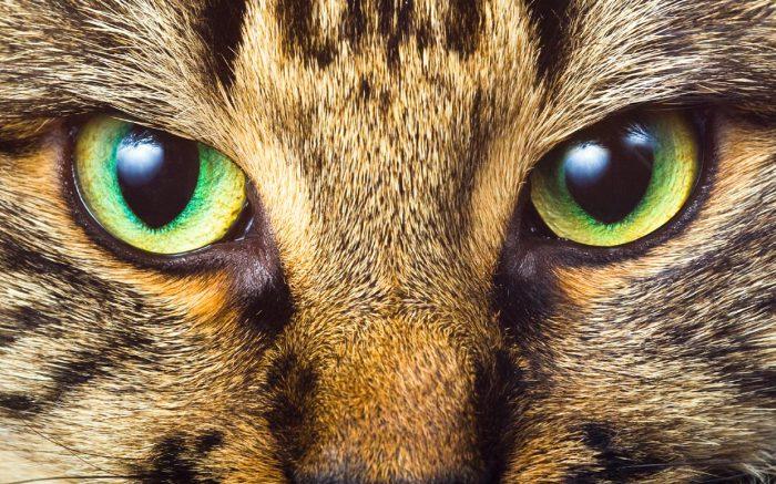 Мир глазами животных.