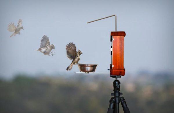 Полет птицы, который детально можно наблюдать, даже находясь на приличном расстоянии.