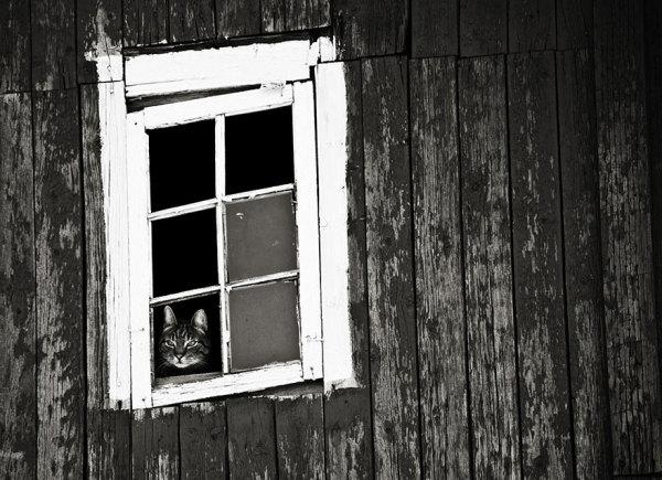 Котики, которые высматривают хозяев.