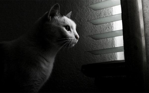 Милые фотографии котов.