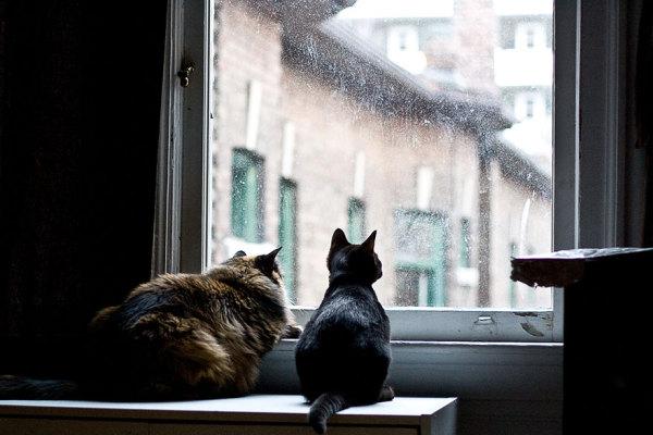 Любимая кошачья работа - смотреть в окно.