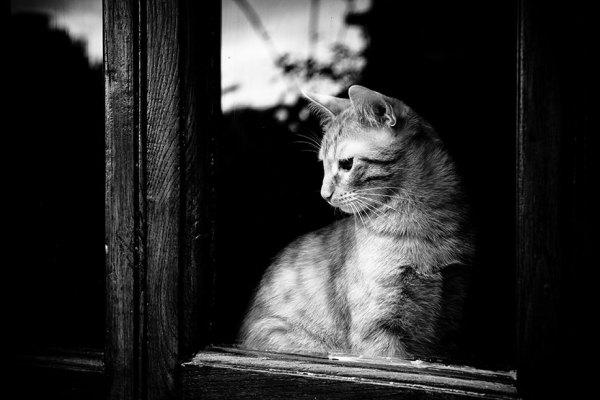 Взгляд сквозь окно.
