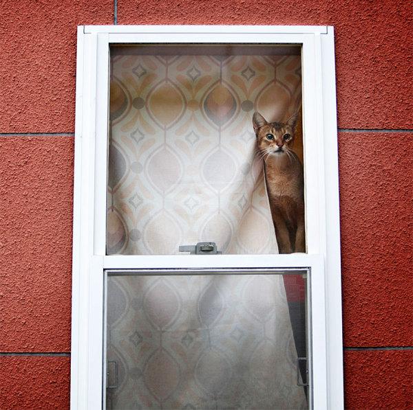 Кошачье ожидание.
