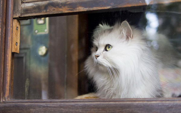 Питомцы, которые любят смотреть в окно.