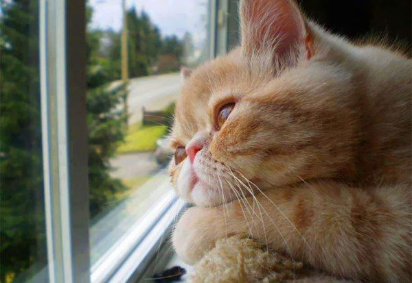 Задумчивый котик.