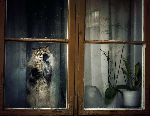 Кот, высматривающий в окно своих хозяев.
