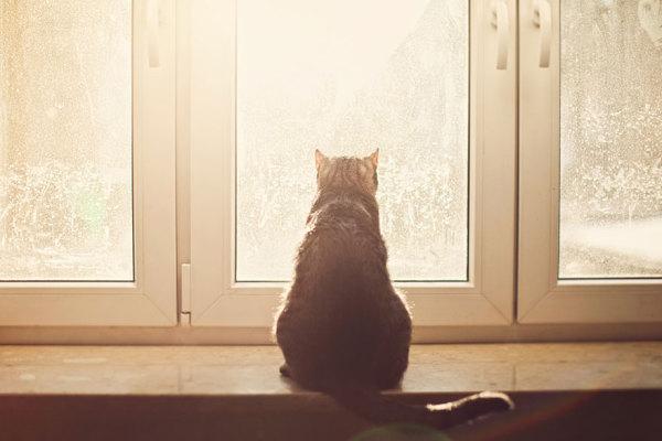 Кот, который любит смотреть в окно.