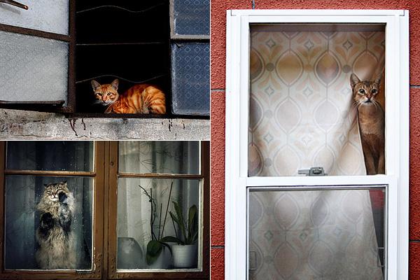 Домашние котики, которые ждут у окна.