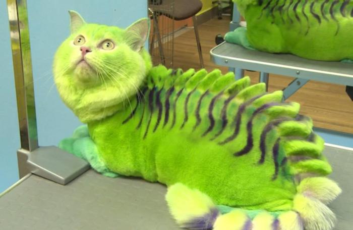 Кошка-дракон. Стилисты из России перевоплотили домашних животных.