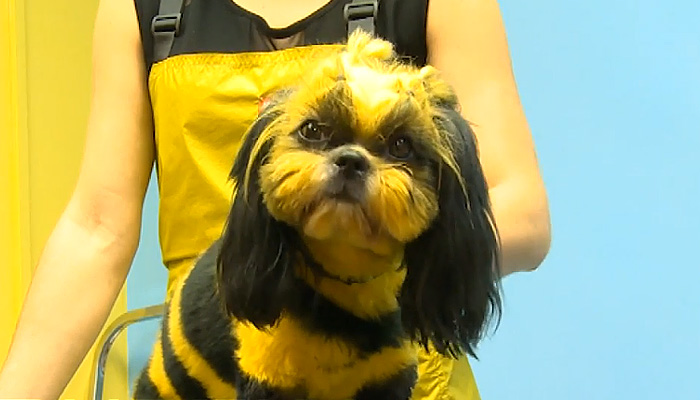 Собака - Пчела из России