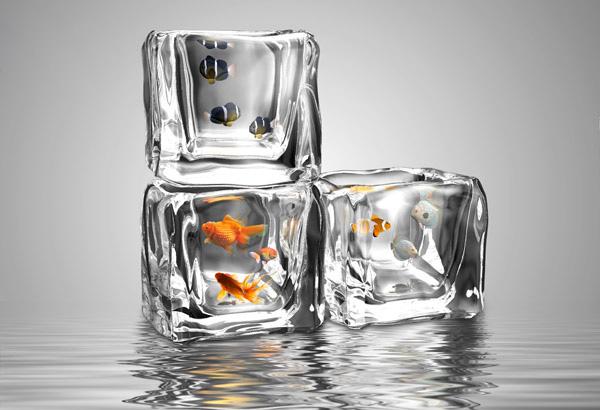 Декоративные рыбки в аквариуме-иллюзии.