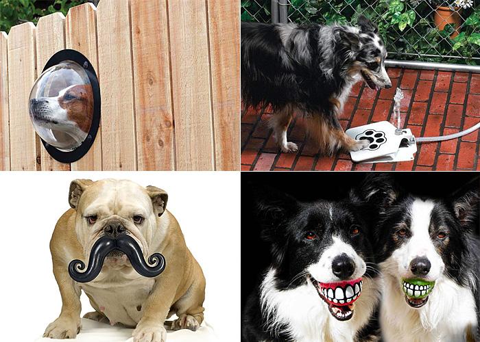 Несколько собачьих радостей.