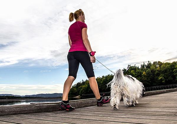 Расстояние между хозяином и собакой можно сократить до 50 см.