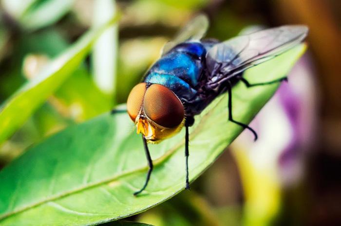 «Рождение» мухи. Таймлапс видео.