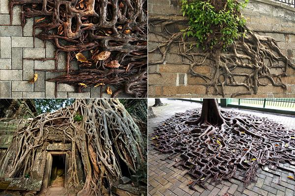 Узоры из корней деревьев, выросших в городе.