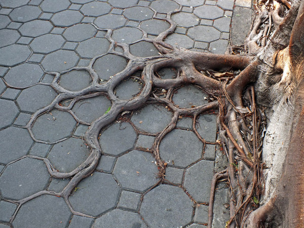 Деревья, которые очень хотели жить.