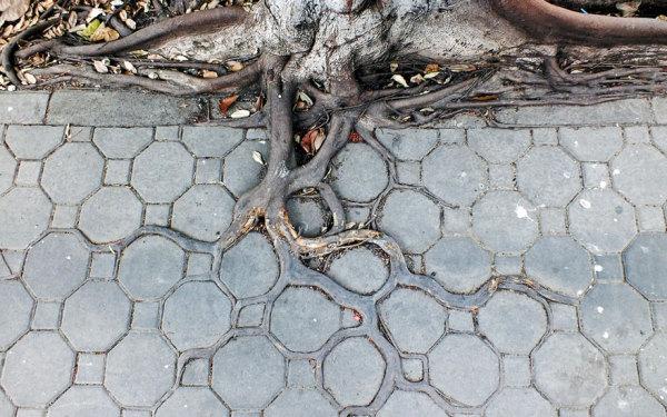 Деревья, выросшие в городских условиях.
