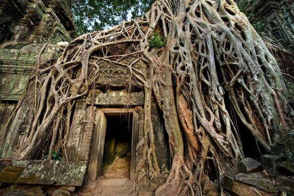 Корни деревьев, создавшие шедевр в сотворчестве с человеком.