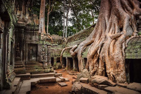 Как деревья приспосабливаются к сосуществованию с цивилизацией.