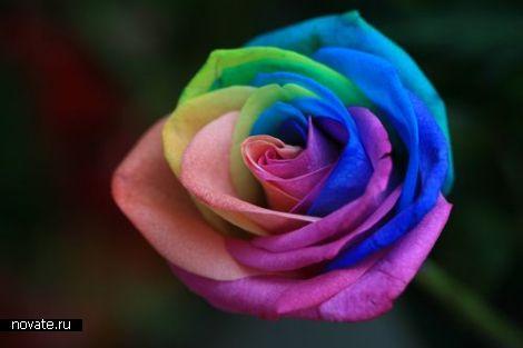 Розы со всеми цветами радуги