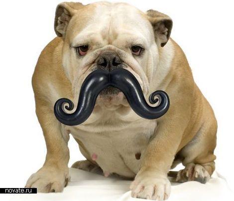 Усы для собак