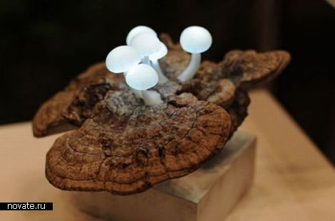 Лампы-грибы от Great Mushrooming
