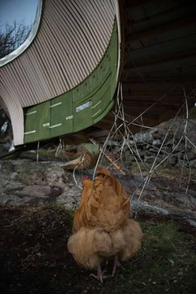 Honshus-1 - ультра-современный курятник в Швеции