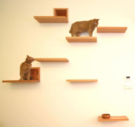 Жилой дом House Cat от Key Operation