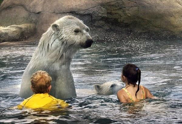 Центр Cochrane Polar Bear Habitat в Канаде
