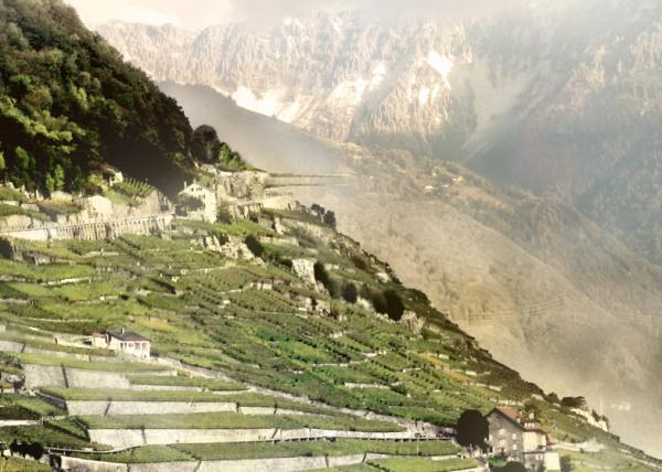 Консольный музей вина в Лаво (Швейцария)