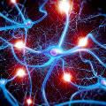 Ученые оцифровали мозг червя и поместили его в робота