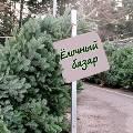 В новогодние елки вмонтируют электронные чипы