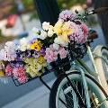 Экспертное мнение: В чём преимущества доставки цветов