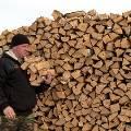 Еду будут производить из древесины