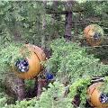 Канадцы создали  шарообразные дома для жизни на деревьях