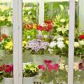 Холодильные камеры для цветов: технические особенности и преимущества оборудования