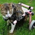 В США на 3D-принтере напечатали «инвалидную коляску» для котенка
