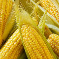 Нанолак на основе кукурузы самостоятельно «заживит» царапины на кузове автомобиля